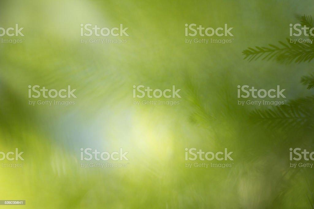 Fondo verde Natural foto de stock libre de derechos
