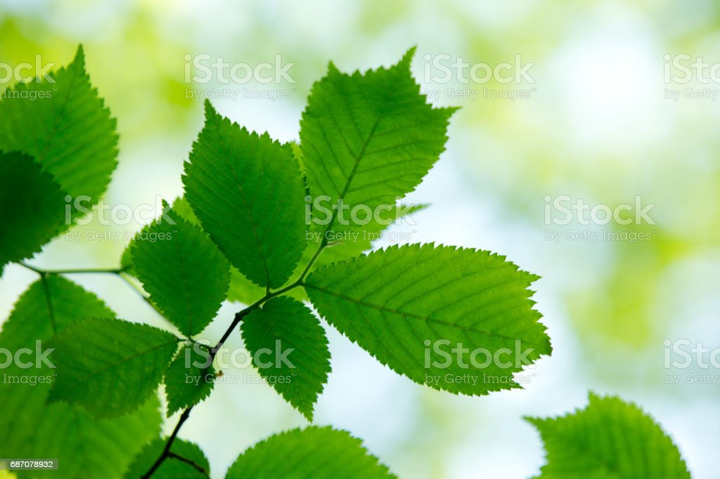 natural green background Lizenzfreies stock-foto