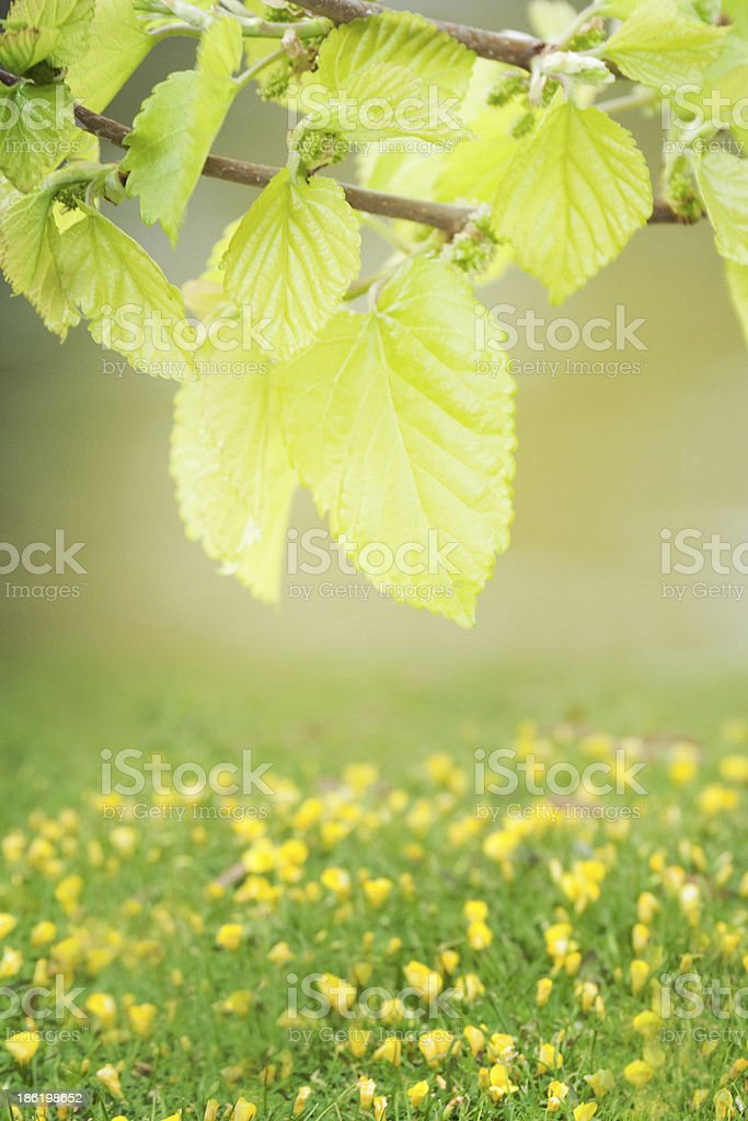 natural green background with selective focus royalty-free stock photo