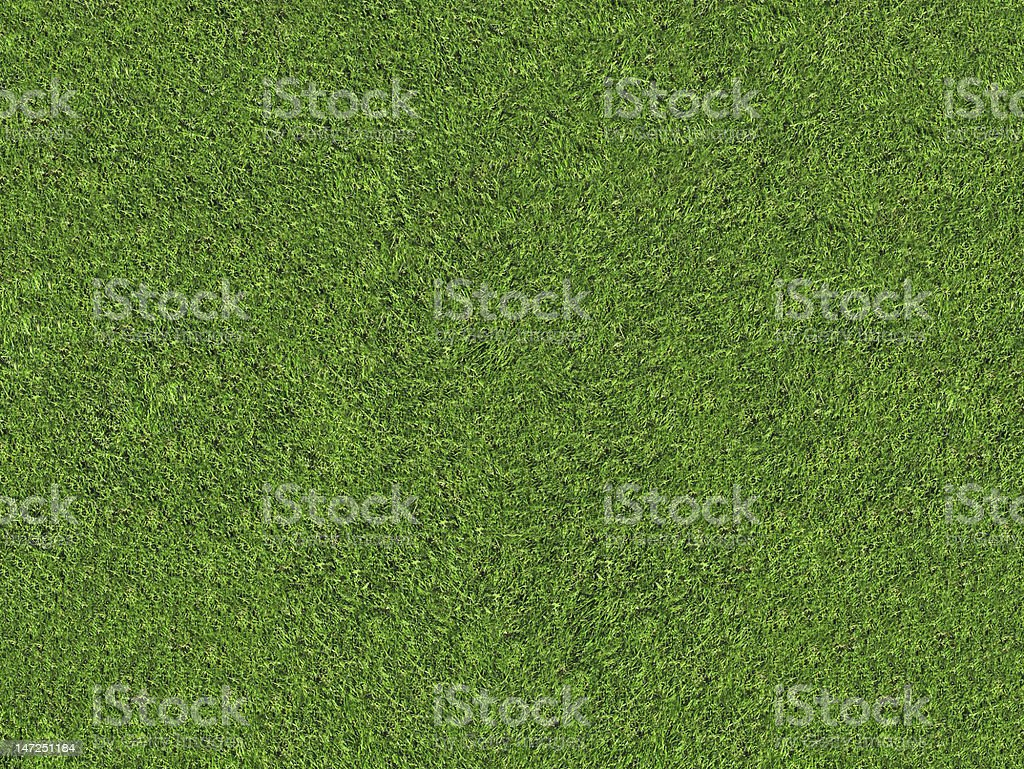 natural green grass field stock photo