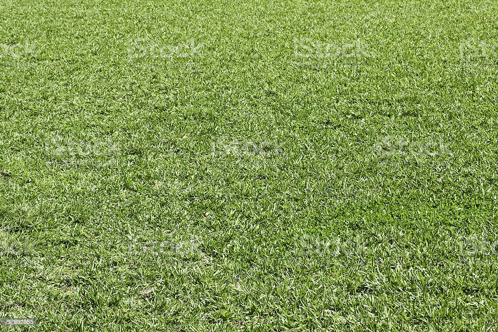 Natural green grass royalty-free stock photo