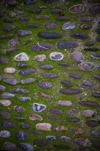 Natural Green Grass with Stone, for Background and Texture stock photo