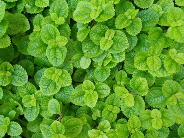 Natural green leaves background – zdjęcie