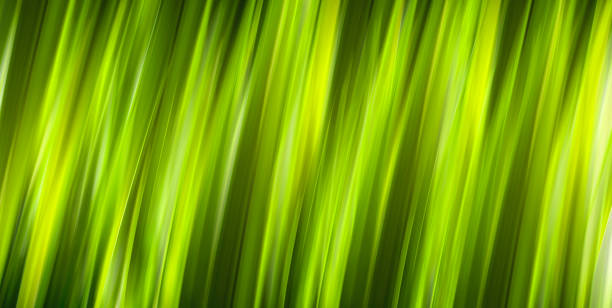natural green spring with background - perpetual motion stock photos and pictures