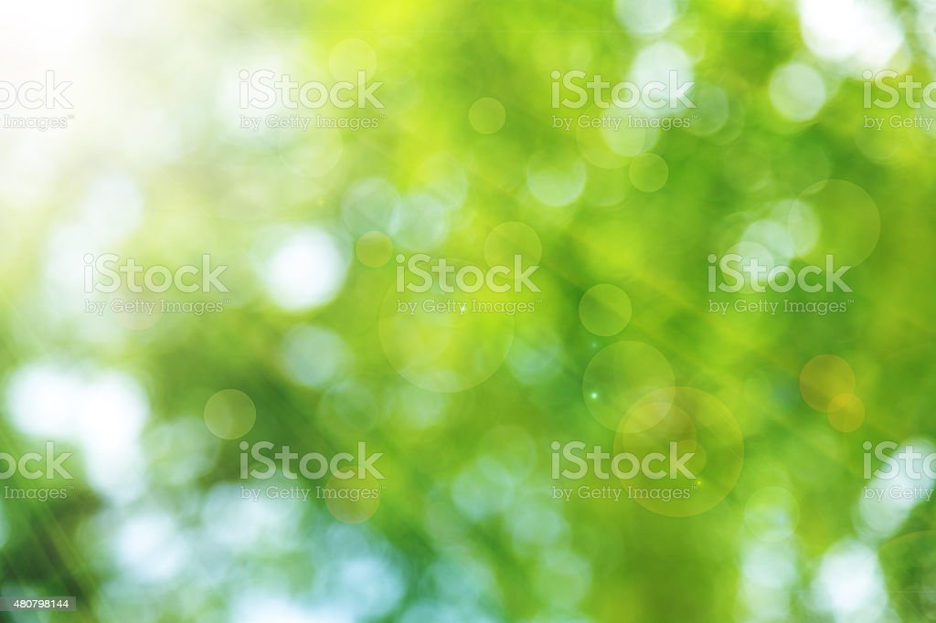 Natural green spring with sunlight bokeh background stock photo