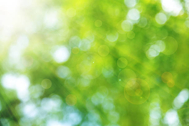 natural green spring with sunlight bokeh background - green background stock photos and pictures