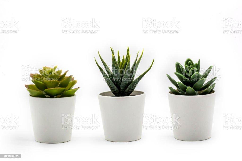 Natuurlijke groene vetplanten cactus, Haworthia attenuata in witte bloempot geïsoleerd op een witte achtergrond. - Royalty-free Beton Stockfoto