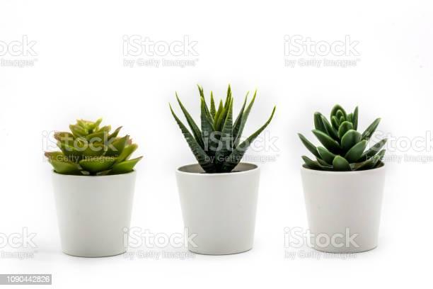 Natuurlijke Groene Vetplanten Cactus Haworthia Attenuata In Witte Bloempot Geïsoleerd Op Een Witte Achtergrond Stockfoto en meer beelden van Beton