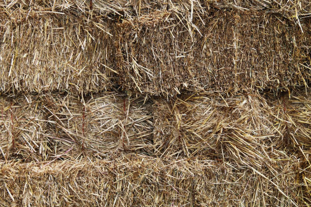 natural hay fodder feed straw bale stacked binded bound close-up suitable for background website backdrop stock photo
