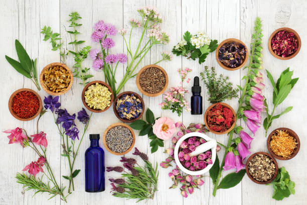 natural herbal medicine - holistic medicine stock photos and pictures