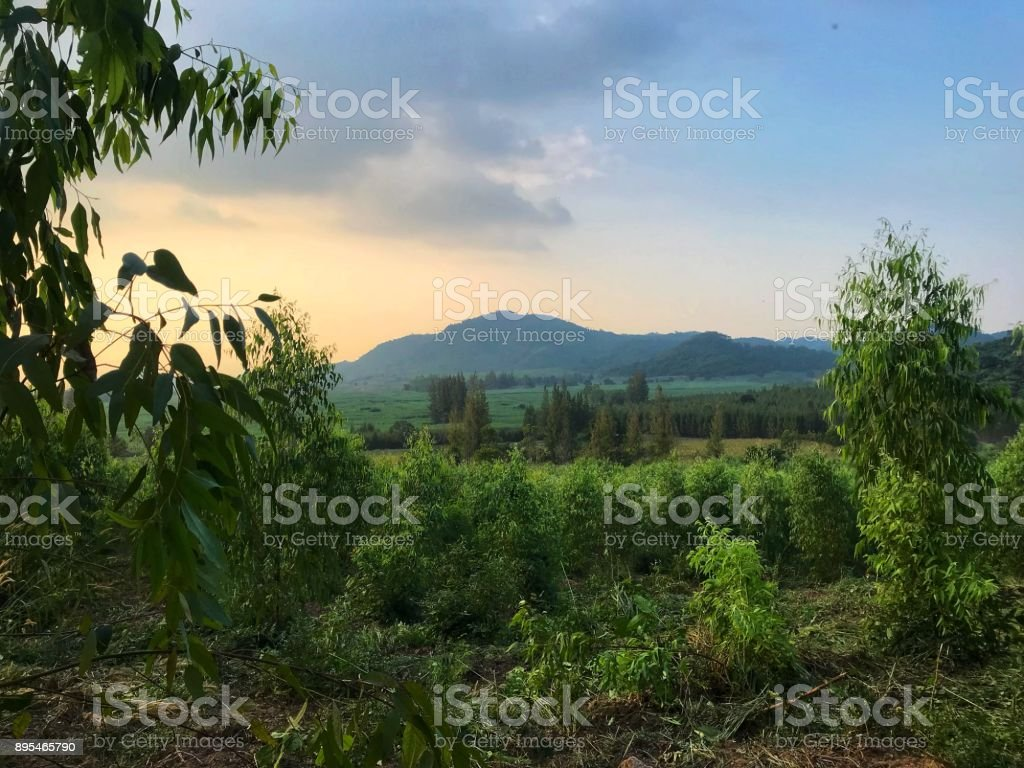 Natural landscape of trees, crops field and mountain. stock photo