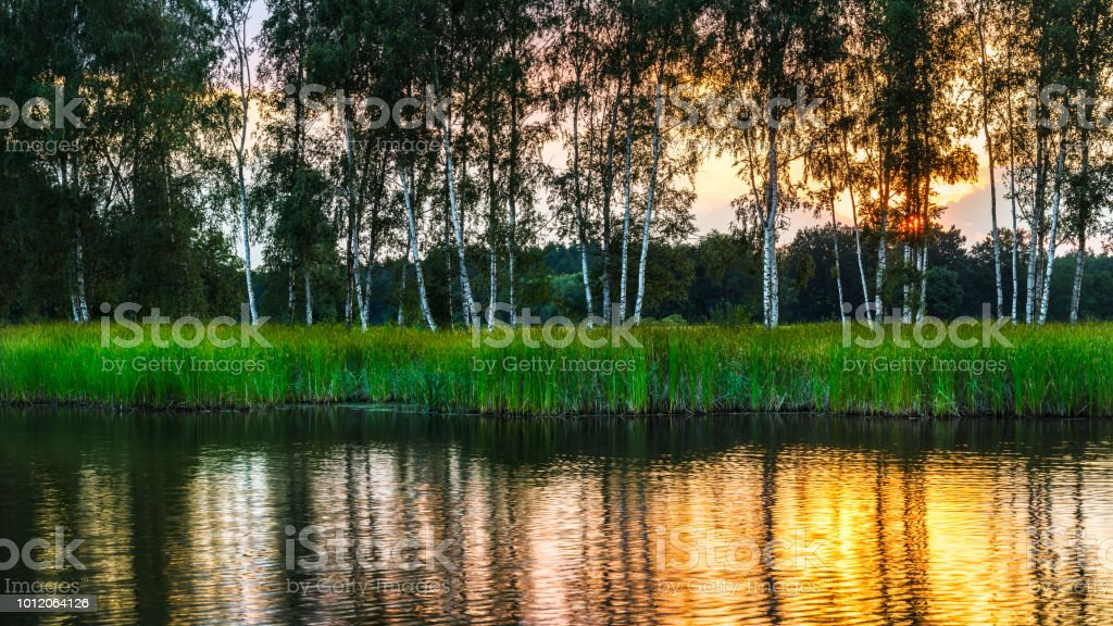 Natural landscape with birches above a pond at sunset. Betula. South Bohemia, Europe stock photo