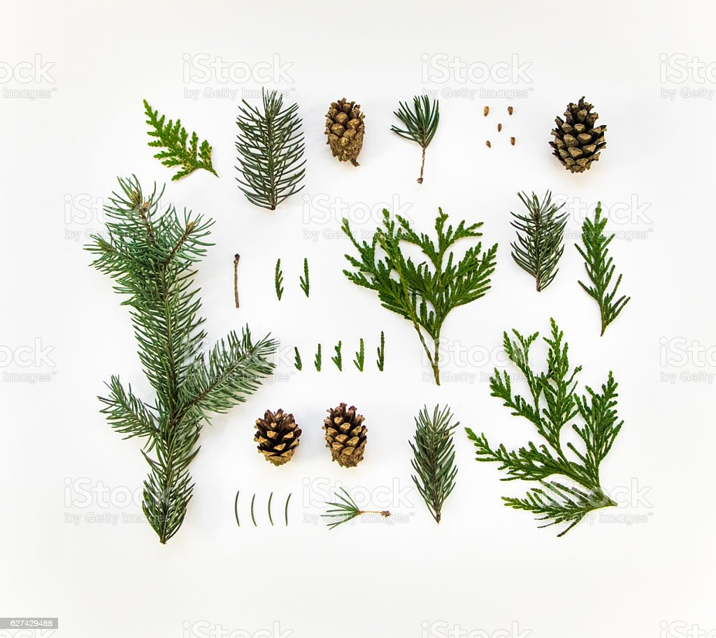Natural layout of winter plants on white background. Flat lay royalty-free stock photo