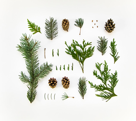 Natural layout of winter plants on white background. Flat lay
