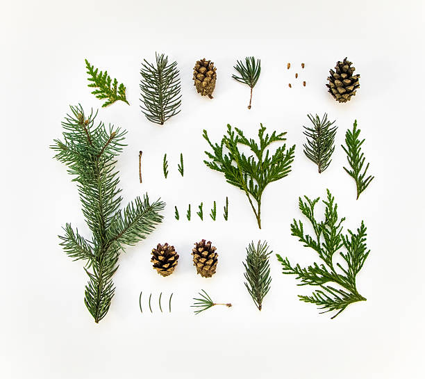 natural layout of winter plants on white background. flat lay - plantdeel stockfoto's en -beelden