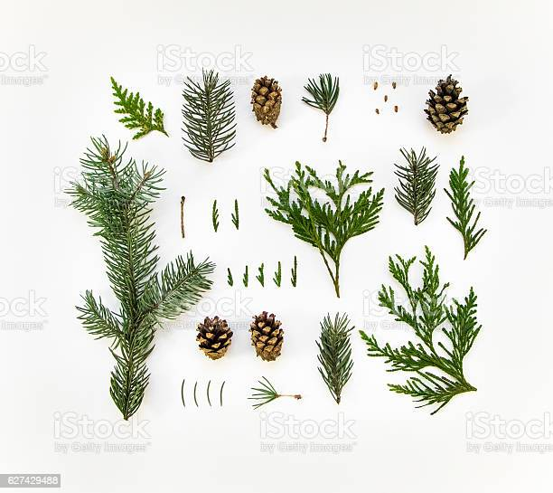 Photo of Natural layout of winter plants on white background. Flat lay