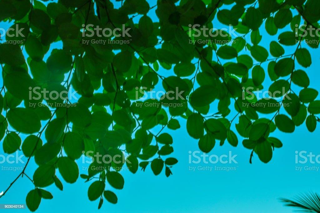 Natural leaf stock photo