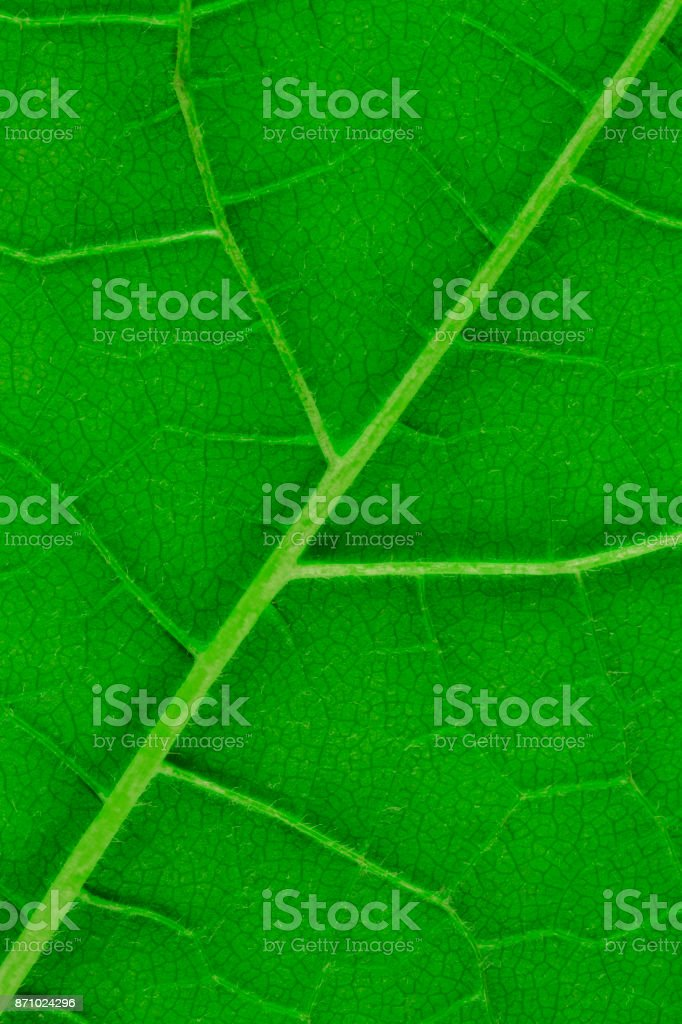 Natural leaf texture pattern stock photo