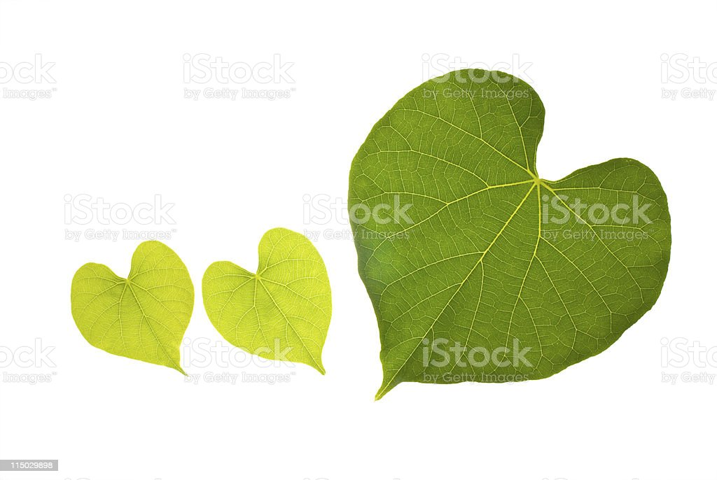 Natural leaf with lovely heart pattern royalty-free stock photo