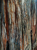 istock Natural light bark of old tree. 1042727534