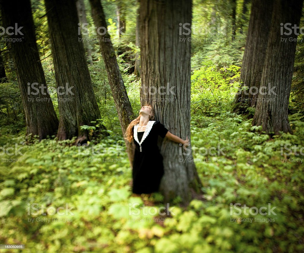Natural Love: A beautiful young woman hugging old cedar tree royalty-free stock photo