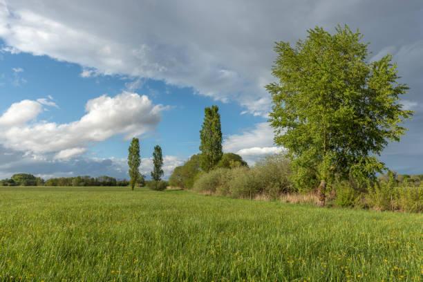 prairie naturelle dans la campagne française - orage en alsace photos et images de collection