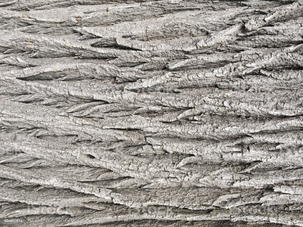 Natural old brown crust wood texture pattern or bark wood background for interior or exterior design with copy space for text or image. Close-up bark, forest vintage. Macro crust tree. stock photo