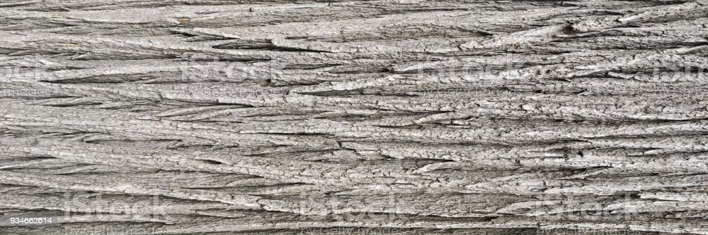 Natural old brown crust wood texture pattern or bark wood background for interior or exterior design with copy space for text or image. Close-up bark, forest vintage. Macro crust tree stock photo
