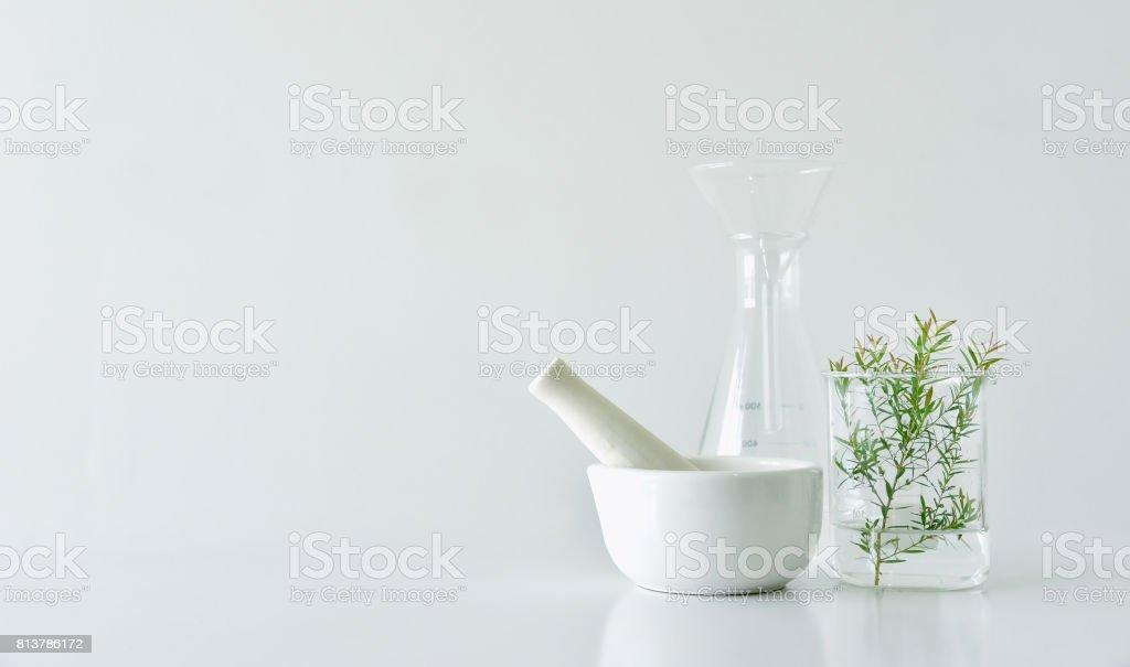 Natürliche organische Botanik und wissenschaftliche Glaswaren, Alternative Krautmedizin, natürliche Hautpflege Beauty-Produkte, Forschung und Entwicklung Konzept. – Foto