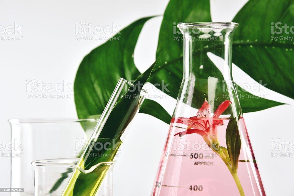 Natürliche organische Extraktion und grüne Kräuter Blätter, Blume Aroma Essenz Lösung im Labor. – Foto