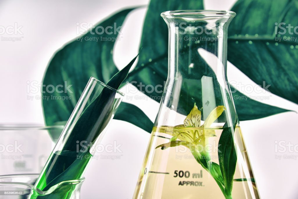 Natural organic extraction and green herbal leaves, Flower aroma essence solution in laboratory. stock photo
