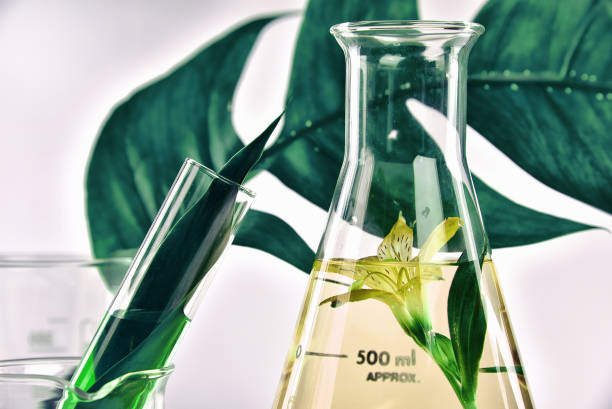 natural organic extraction and green herbal leaves, flower aroma essence solution in laboratory. - chemical stock photos and pictures