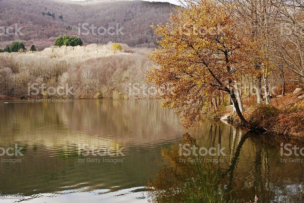 Natural Park El Montseny stock photo