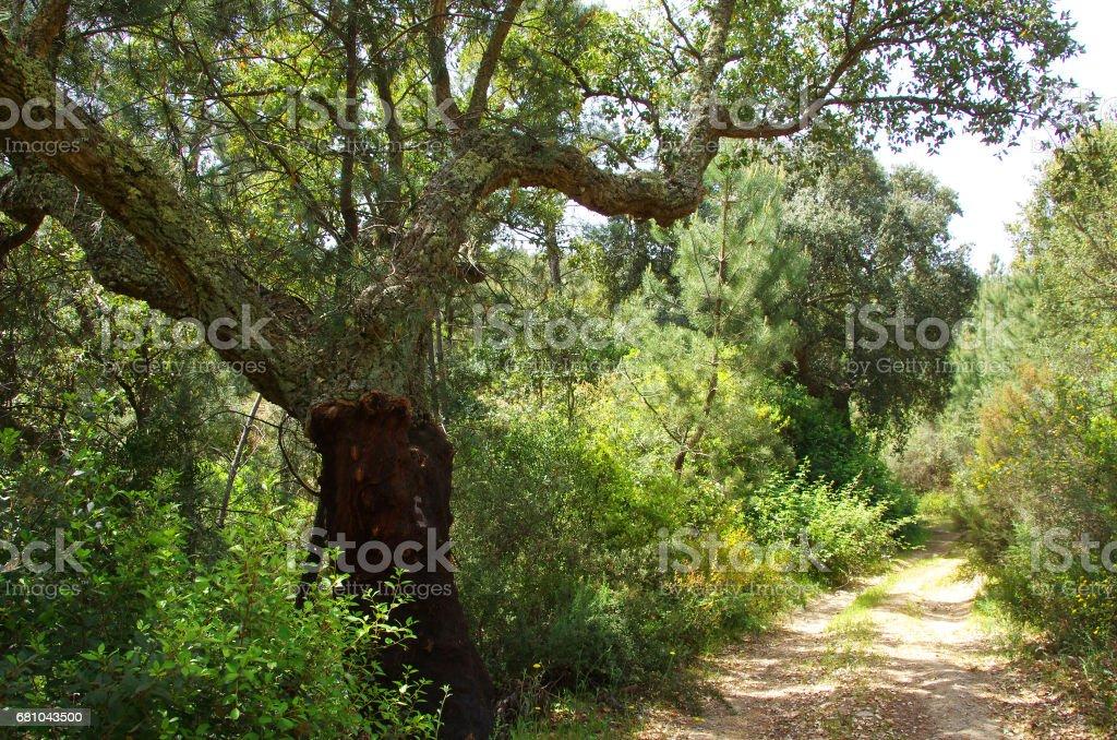 Natural Park of Serra de Ossa royalty-free stock photo