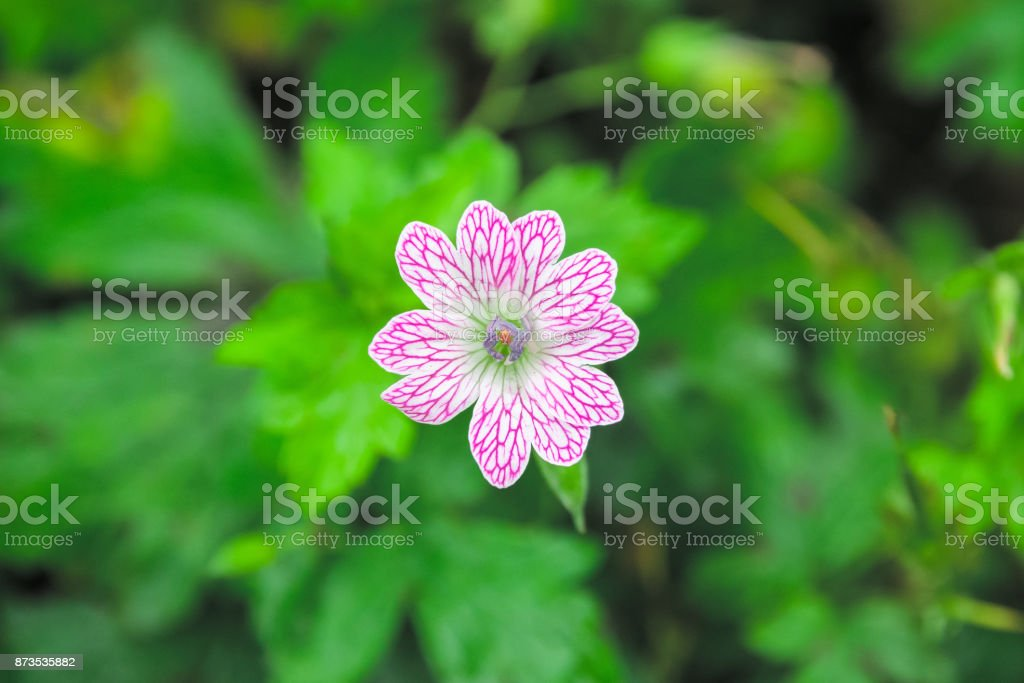 Natural pattern, closeup of a wild flower with unique pattern stock photo