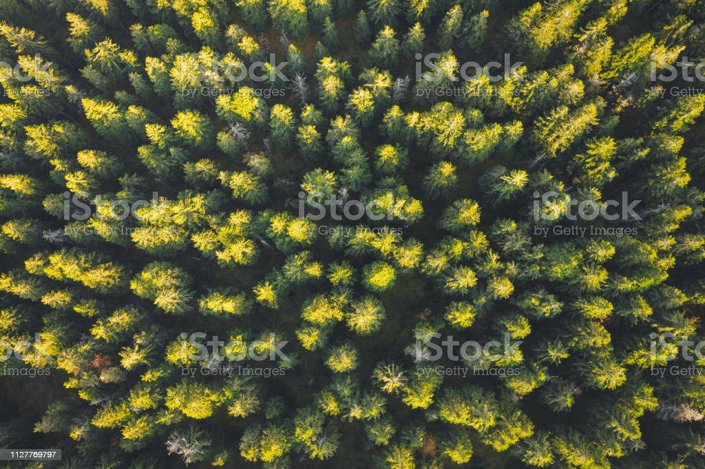 Natural Pattern - Pine Trees stock photo
