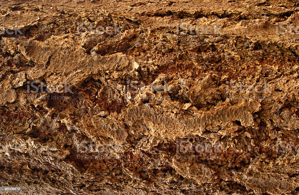 natural patterned bark of a very old tree royalty-free stock photo