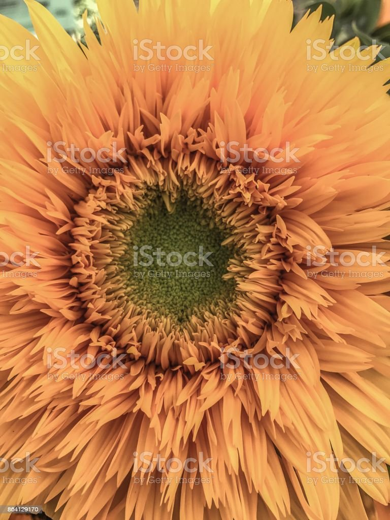Natural perfection royalty-free stock photo