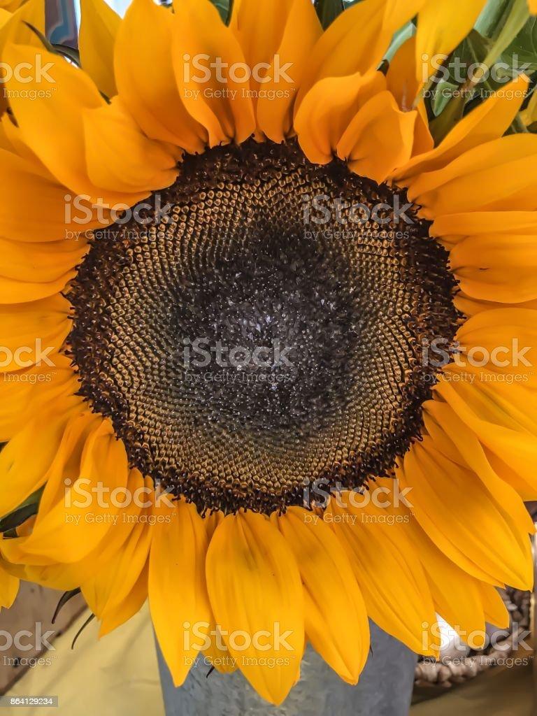 Natural perfection royalty-free stock photo