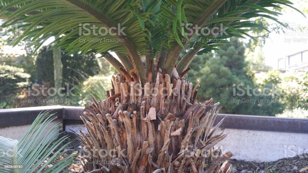 Natural Lizenzfreies stock-foto