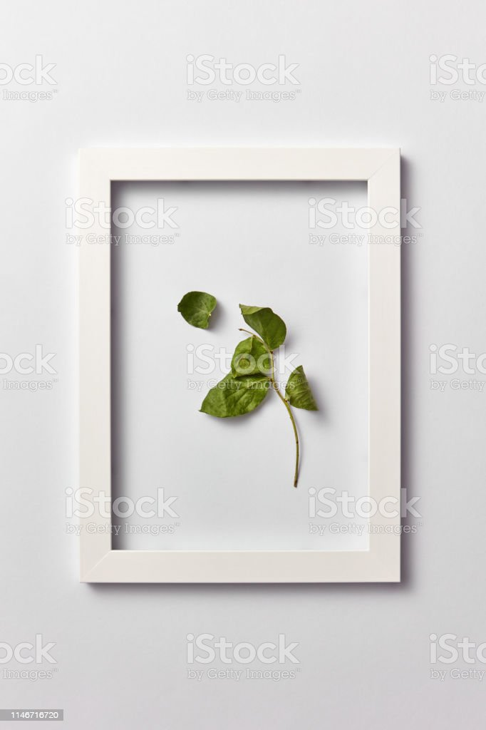 Decorative composition from green leaf branch in a rectangular frame...