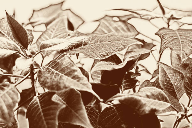 Natural plant monochrome background, brown toning stock photo