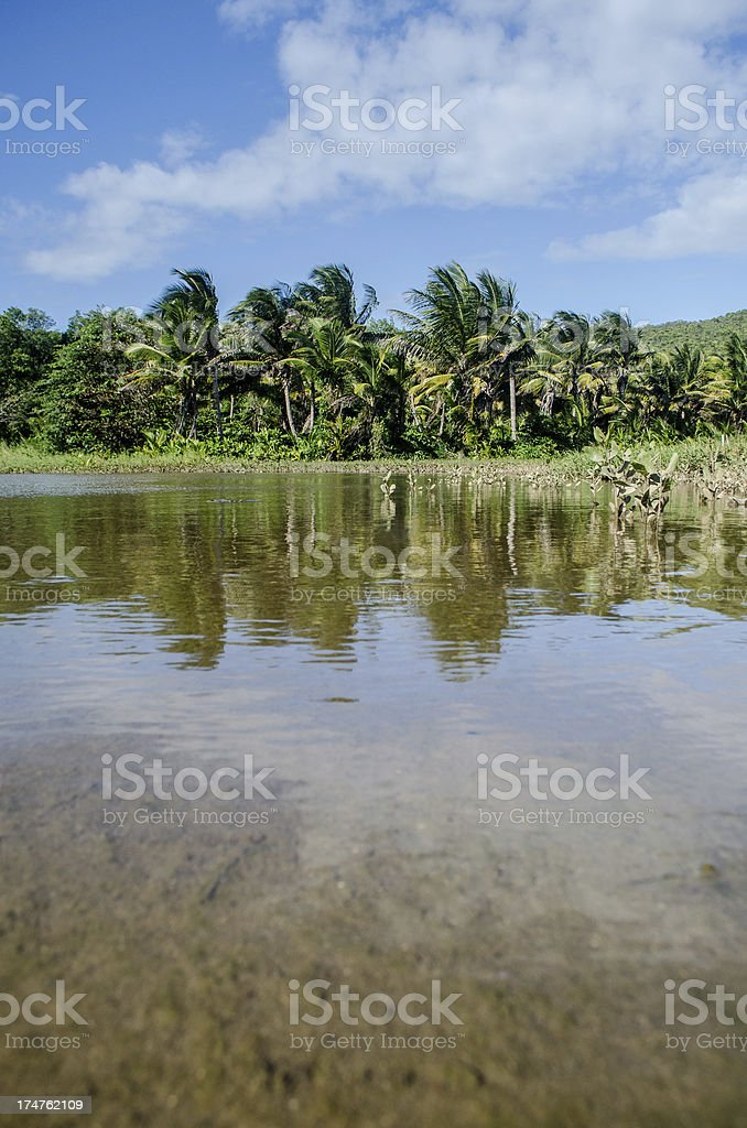 natural pool and palm trees royalty-free stock photo