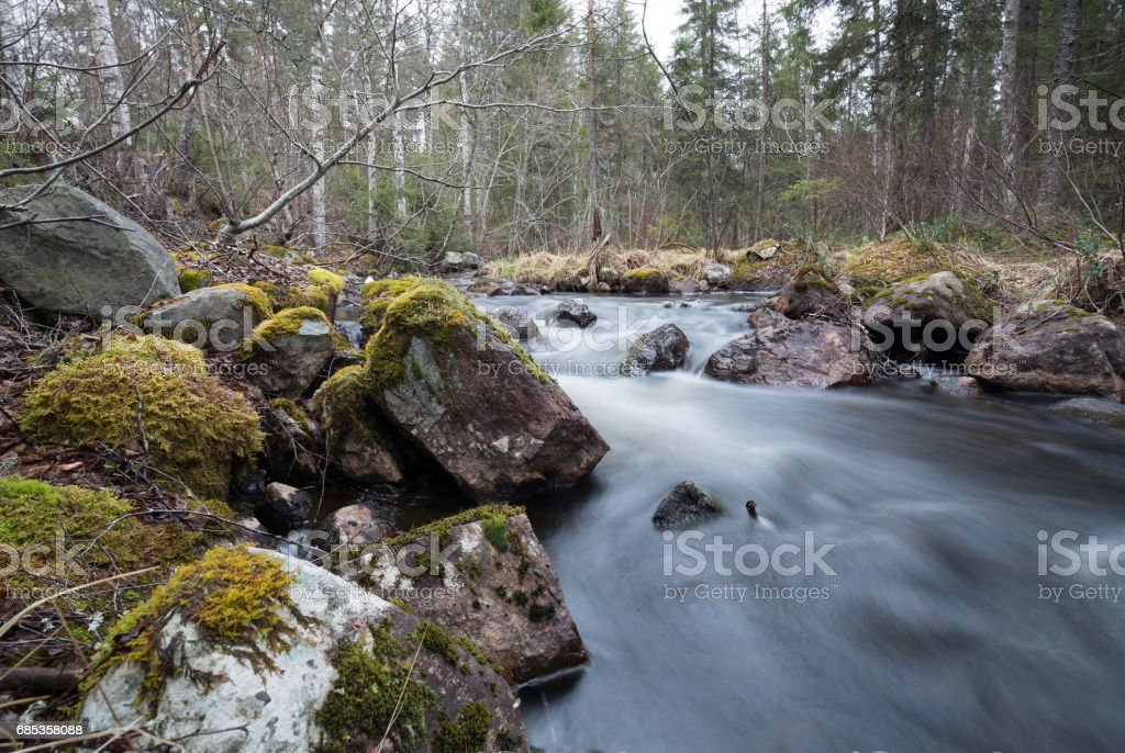Natural river in sweden running through a mixed forest foto de stock royalty-free