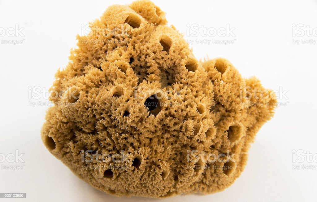 Natural Sea Sponge Hd Stock Photo & More Pictures of Animal Body ...
