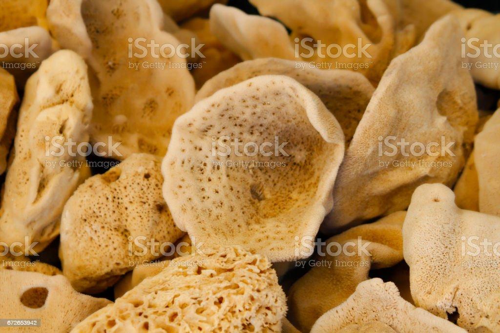 Natural sea Sponge stock photo