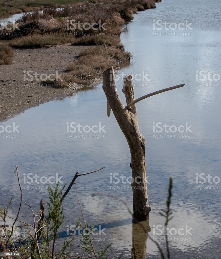 Natural shape royalty-free stock photo