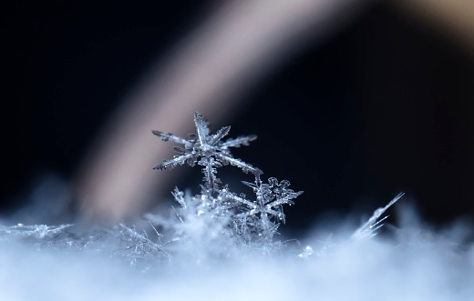 istock natural snowflakes on snow, photo real snowflakes during a snowfall 895699480