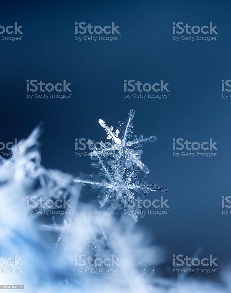 natural snowflakes on snow - Royalty-free Aralık Stok görsel