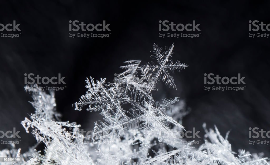 natural snowflakes on snow - Royalty-free Beauty Stock Photo